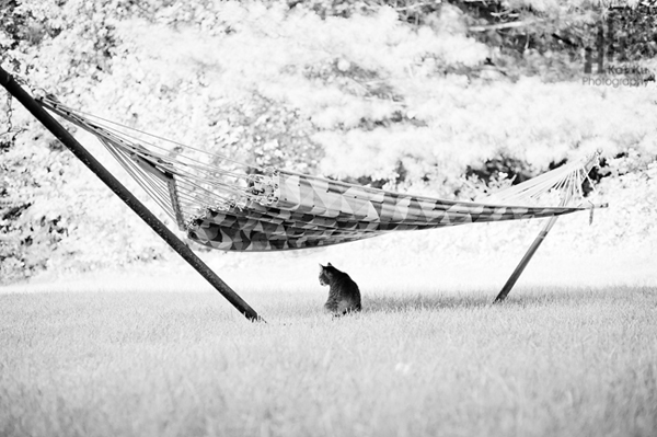 Cat-and-hammock