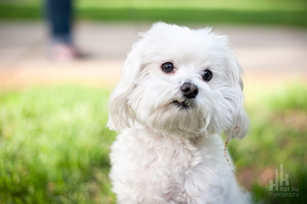 Kat-Ku_UMichigan-Pets_Roni_02