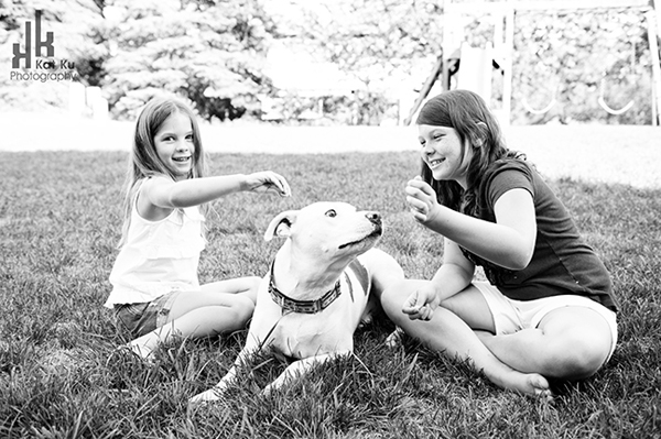 Michigan-Pet-Photography_Mellow-the-Pitbull_-08