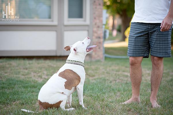 Michigan-Pet-Photography_Mellow-the-Pitbull_-28