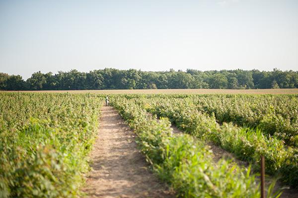 Pure Michigan_Kat Ku_Makielski Berry Farm_05