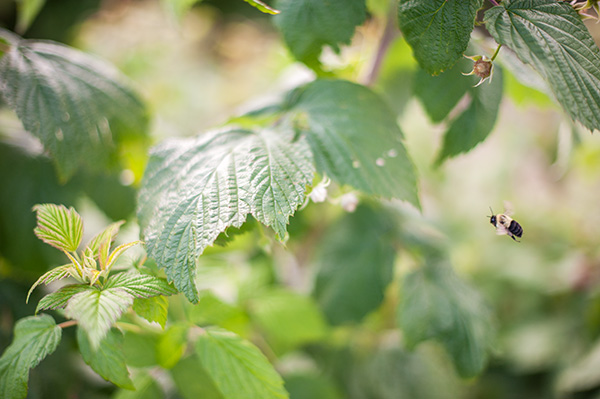 Pure Michigan_Kat Ku_Makielski Berry Farm_07