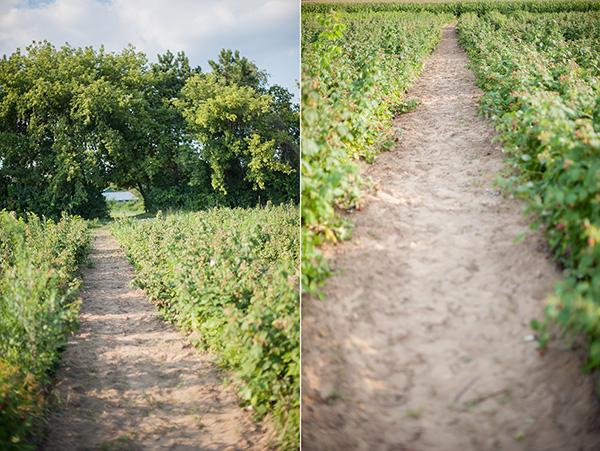 Pure Michigan_Kat Ku_Makielski Berry Farm_15