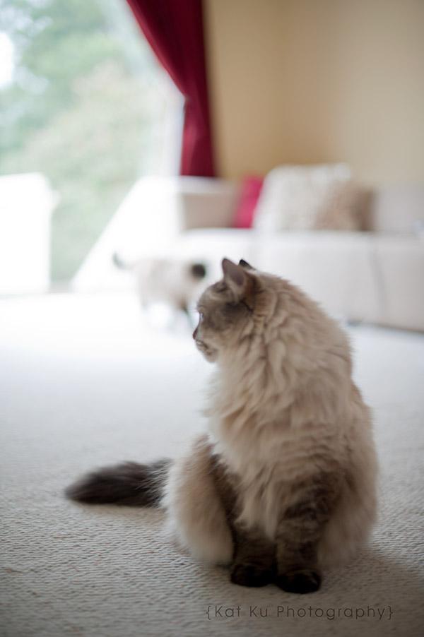 Shoko_Solemn-Cat_02