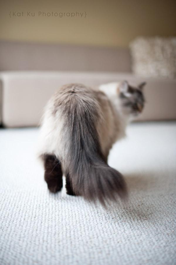 Shoko_Solemn-Cat_05