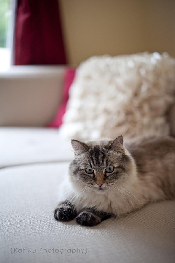 Shoko_Solemn-Cat_06