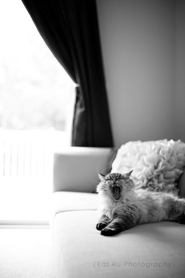 Shoko_Solemn-Cat_07