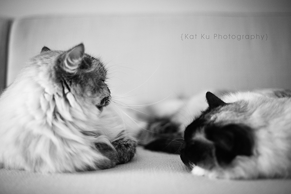 Shoko_Solemn-Cat_09