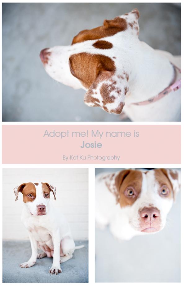 Josie-blog