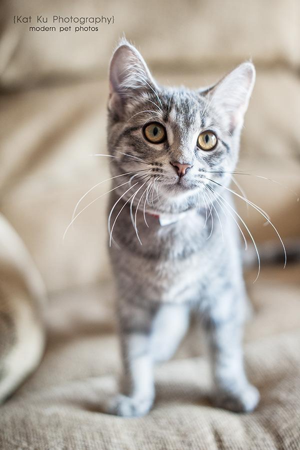 Kat Ku Photography_Tiny Lions Cat Rescue_Stephanie_03