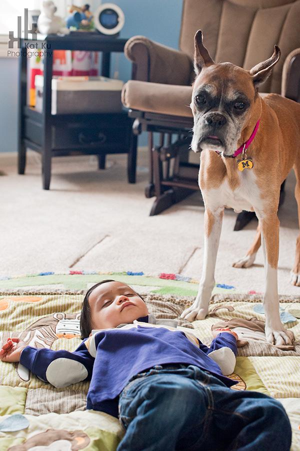 Sarah-the-Boxer_Modern-Pet-Photography_03
