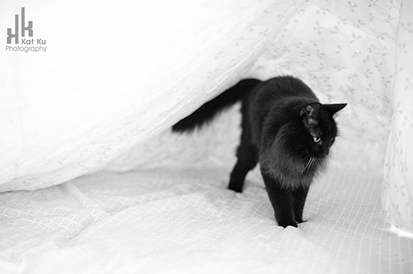 Aladdin_Modern-Cat-Photography_13