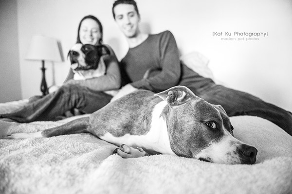 Kat Ku Photography_Bane and Raven_Pit Bull_19
