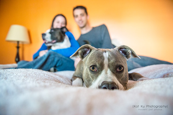 Kat Ku Photography_Bane and Raven_Pit Bull_20