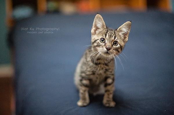 Adoptable Kittens_01