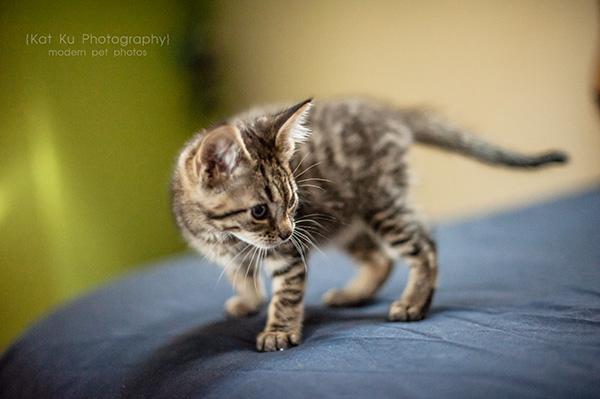Adoptable Kittens_02