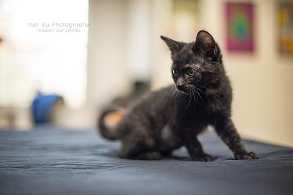 Adoptable Kittens_08