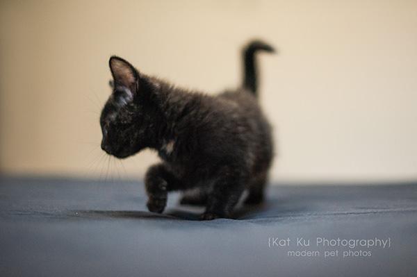 Adoptable Kittens_09