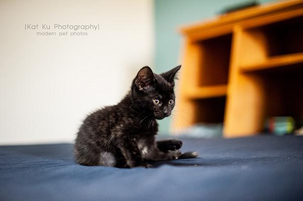 Adoptable Kittens_10