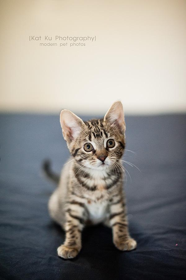 Adoptable Kittens_12