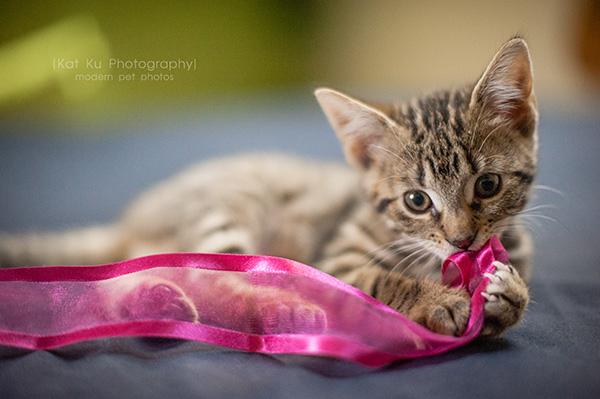Adoptable Kittens_15