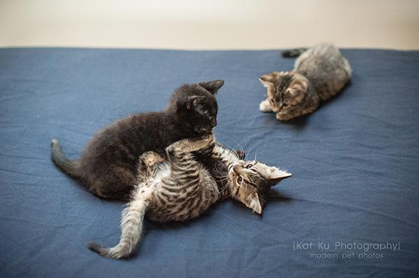 Adoptable Kittens_17