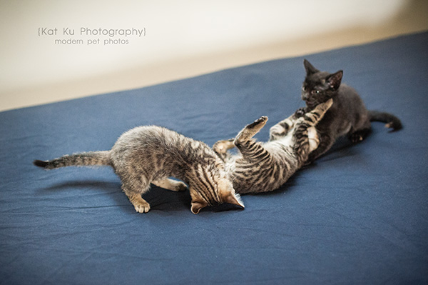 Adoptable Kittens_24