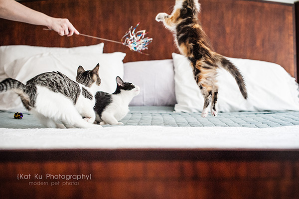 Kat Ku Photography - Snixle, Smudge, and Hannah Piper-10