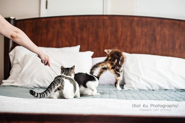Kat Ku Photography - Snixle, Smudge, and Hannah Piper-11