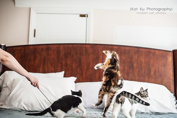 Kat Ku Photography - Snixle, Smudge, and Hannah Piper-12