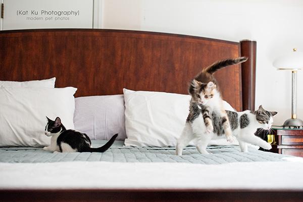 Kat Ku Photography - Snixle, Smudge, and Hannah Piper-15