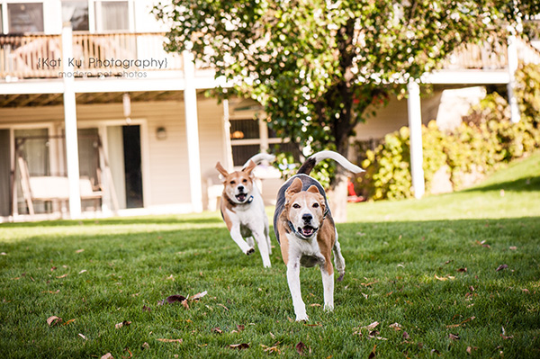 Kat Ku Photography_Hatfield and McCoy_18