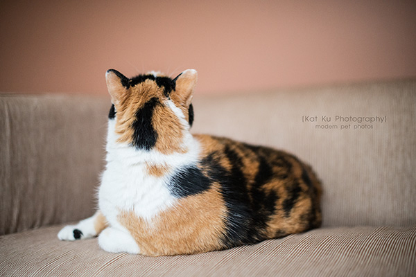evangers cat food
