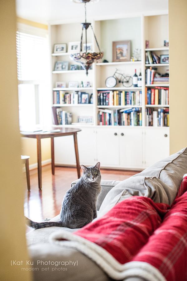 Kat Ku Photography_Dorian the Gray Cat01