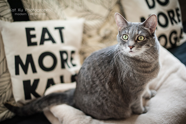 Kat Ku Photography_Dorian the Gray Cat11