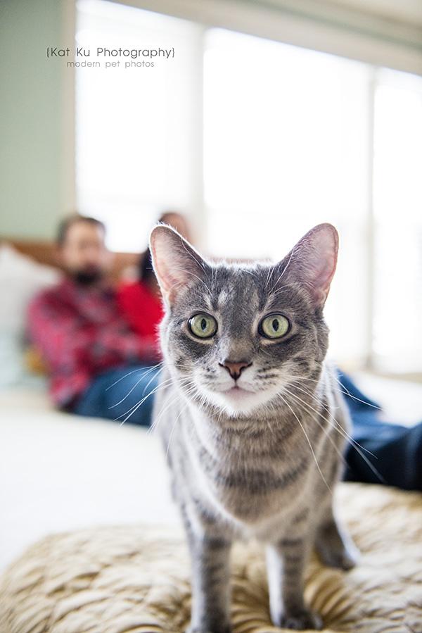 Kat Ku Photography_Dorian the Gray Cat15