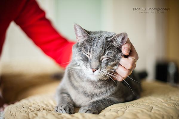 Kat Ku Photography_Dorian the Gray Cat20