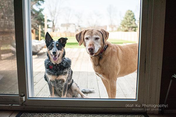 Kat Ku - Dexter Michigan Dog and Pet Photography_ 01
