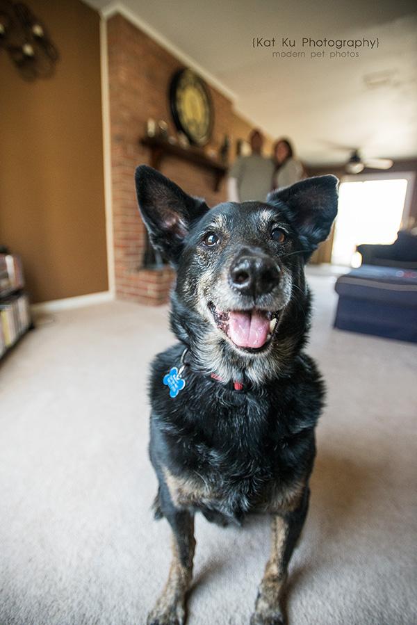 Kat Ku - Dexter Michigan Dog and Pet Photography_ 03