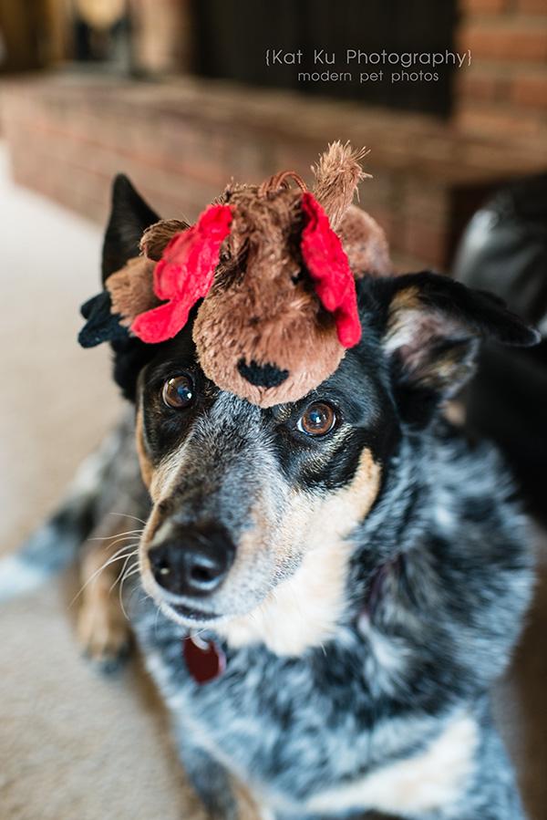 Kat Ku - Dexter Michigan Dog and Pet Photography_ 05