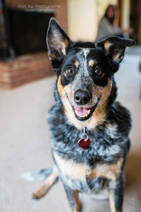 Kat Ku - Dexter Michigan Dog and Pet Photography_ 08