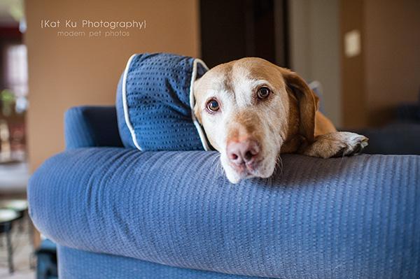 Kat Ku - Dexter Michigan Dog and Pet Photography_ 09