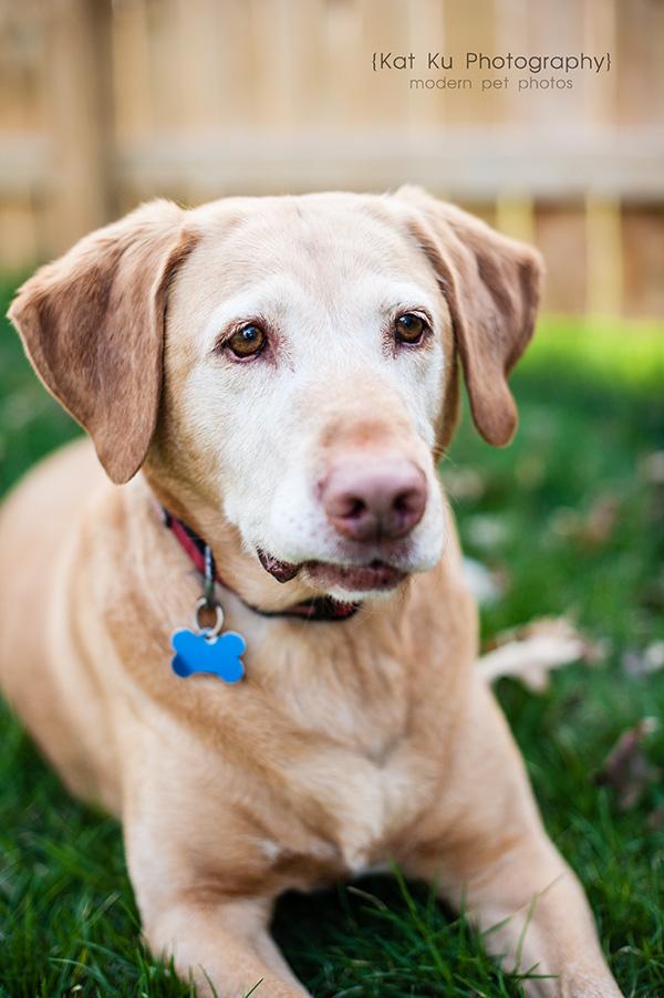 Kat Ku - Dexter Michigan Dog and Pet Photography_ 11