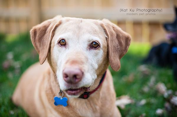 Kat Ku - Dexter Michigan Dog and Pet Photography_ 12