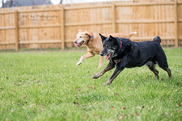 Kat Ku - Dexter Michigan Dog and Pet Photography_ 13