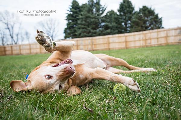 Kat Ku - Dexter Michigan Dog and Pet Photography_ 17