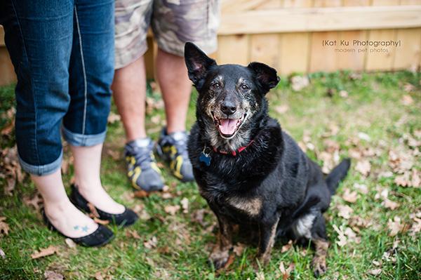 Kat Ku - Dexter Michigan Dog and Pet Photography_ 24