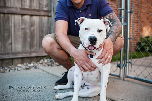Kat Ku Michigan Pet Photography - Scrappy the White Pit Bull_01