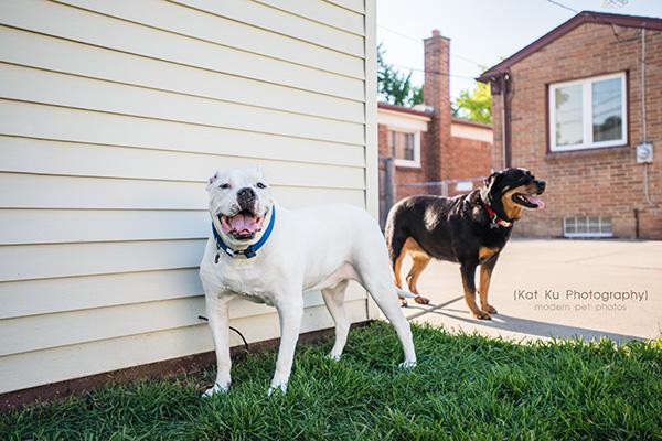 Kat Ku Photography_Canton Pet Photography_17