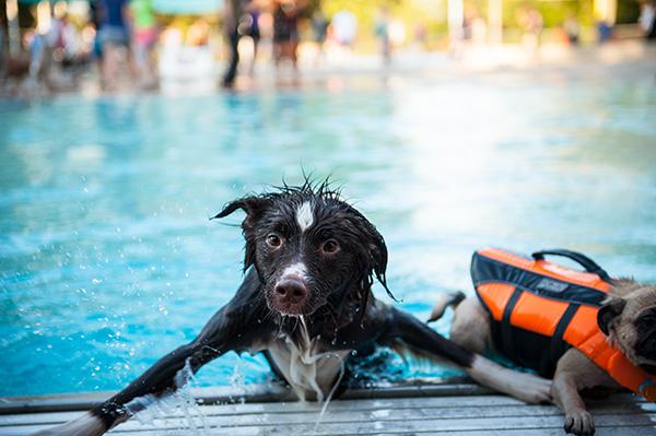 Dog Swim-1 copy